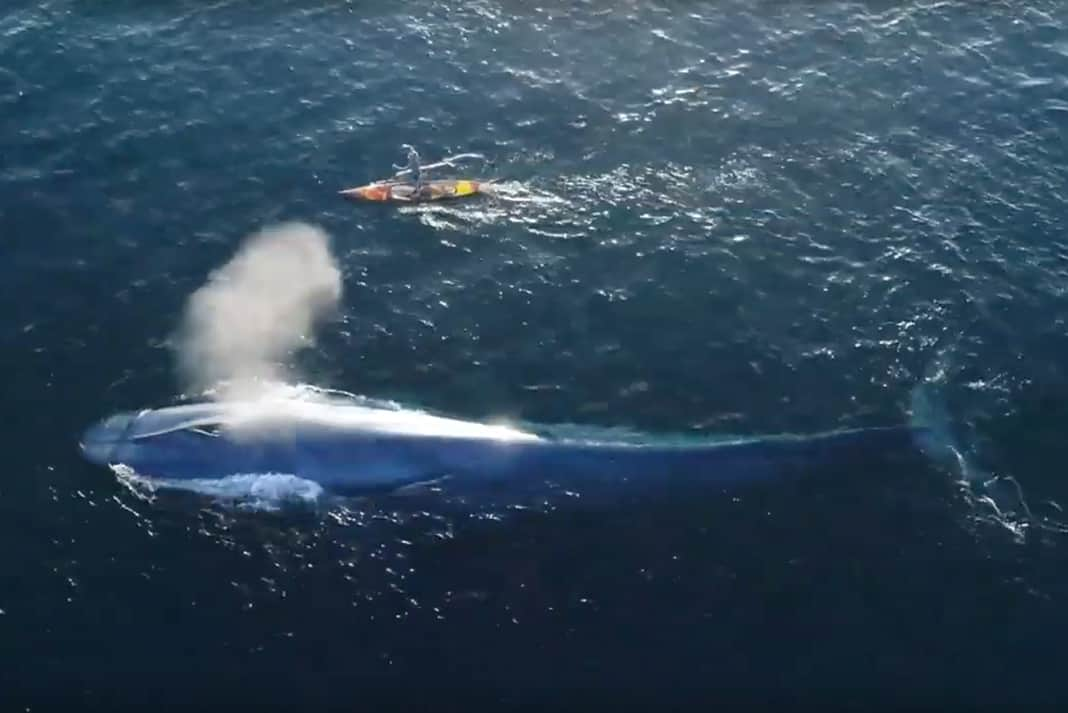 Paddleboarder with blue whale