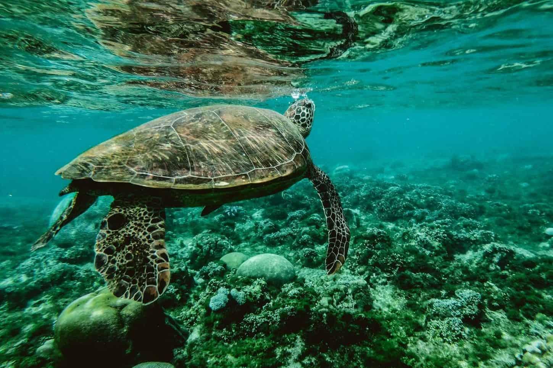 PHOTO: pexels.com | Belle Co